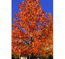 Blue and Orange-  Photographic Print