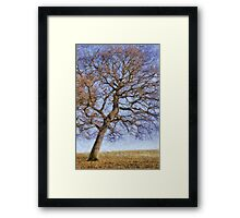Being with Trees Framed Print