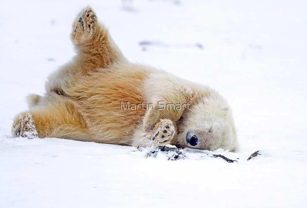 Rolling in the Snow by Martin Smart