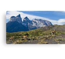 Where Guanaco roam free, Torres del Paine National Park Canvas Print