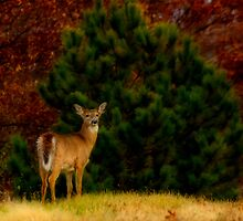 Fall Doe by Thomas Young