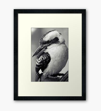 Sly Kooky Framed Print