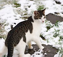 January Cat by Pagani