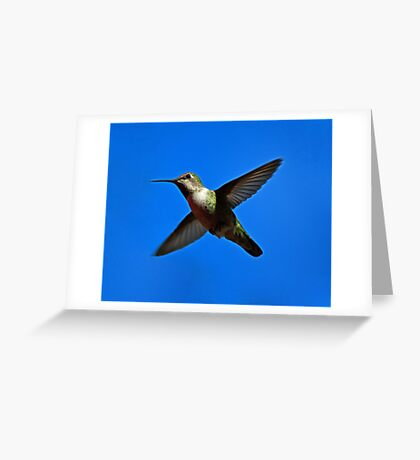 Humming Bird in Flight Greeting Card