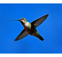 Humming Bird in Flight Photographic Print