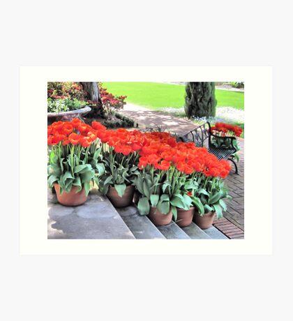 Red Blooms Art Print
