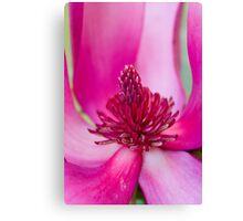 "Hot Pink Magnolia ""Susan"" Canvas Print"