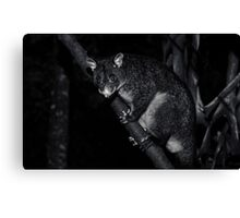 Nighttime Visitor Canvas Print