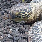 Sea Turtle Iphone Case by Shaina Haynes