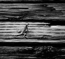 mojave fringe toed lizard by tjcunningham