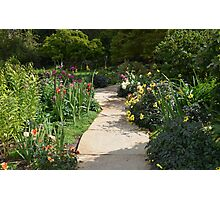 A Happy Path Through Flowers Photographic Print