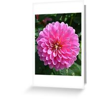 Bright Pink Dahlia Greeting Card