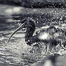 Splashing About by Josie Eldred