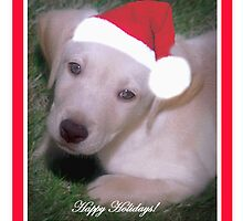 Puppy Dog in a Santa Hat by Cathleen Knutson