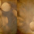 Hydrangea duo by Softly