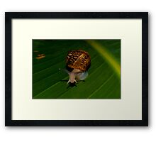 A Snale  (What Are You Looking At) Framed Print