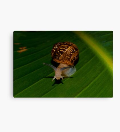 A Snale  (What Are You Looking At) Canvas Print