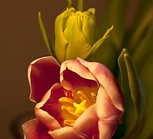 Classical Tulips  by Kasia-D
