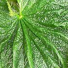 Green 5 by brozekcordier