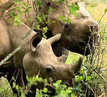Black Rhino by ebonyjaynephoto