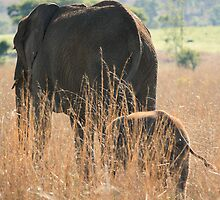 Mother & Baby Elephant by ebonyjaynephoto