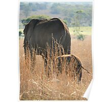 Mother & Baby Elephant Poster