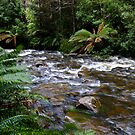 Tasmanian World Heritage area by Karen Stackpole