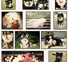 Finnish Lapphund Club of Victoria 2012 by FLCV