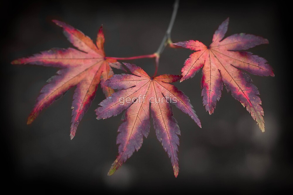 Last Remaining Leaves by geoff curtis