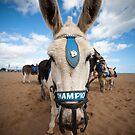 Champion the Wonder Donkey by Jon Bradbury