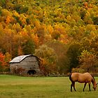 Autumn Graze by J.K. York