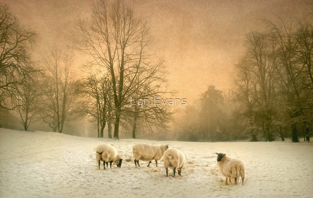 Winter's eve by Lyn Evans