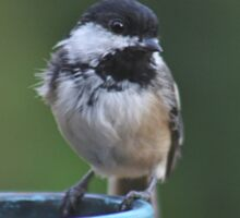Chickadee perched on the edge of a flower pot Sticker