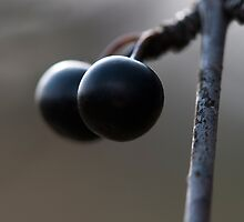 Two Berries by Gary Chapple