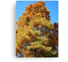 Fall Series 3 Canvas Print