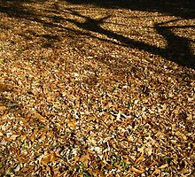 Leaves,Leaves,Leaves by dge357