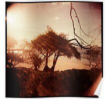 Pandanus Sunset Poster