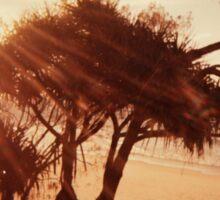 Pandanus Sunset Sticker