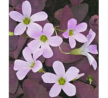 Pink Flowers on Linen Photographic Print