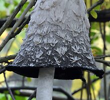 Shaggy Ink Cap Bell - Woolston Park by Chris Monks
