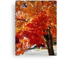 Fall Series 45 Canvas Print