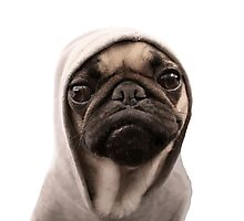 COOL PUG DOG - HIP HOP STYLE Photographic Print