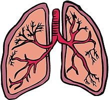 Funny cartoon lungs - Respiratory system Photographic Print