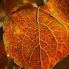 Autumn Beauty by Anne Hargreaves