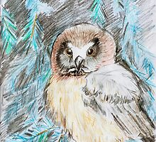 Northern Saw-whet Owl in a Blue Spruce by Sally O'Dell