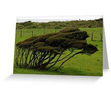 Wind-blown Trees Greeting Card