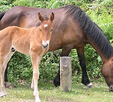 Horse and Foal by Ken1