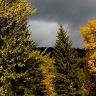 Fall colors are in. by becca2425