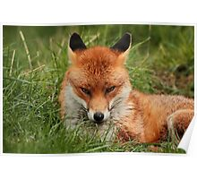 Sly Fox Poster