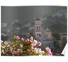 Bougainvillea in the morning sun Poster